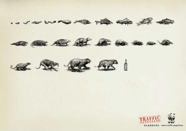 Evolução do tigre