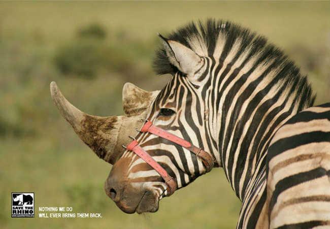 Salve o rinoceronte: nada do que fazemos poderá trazê-los de volta