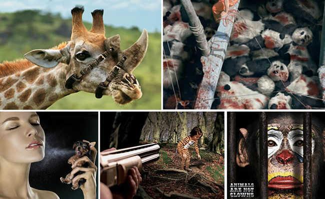 Propagandas ambientais para refletir sobre o trato com os animais