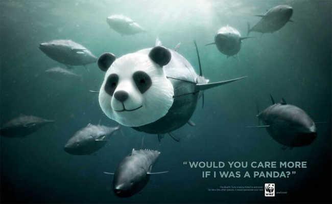 Você se importaria mais se fosse um panda em vez de um atum?