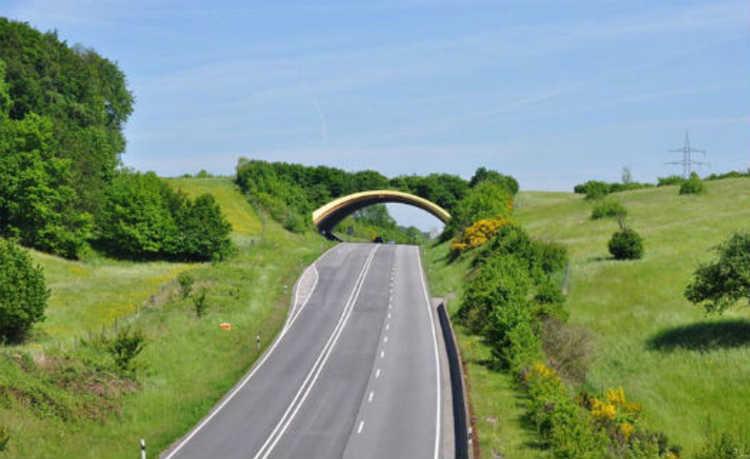 Ponte com vegetação
