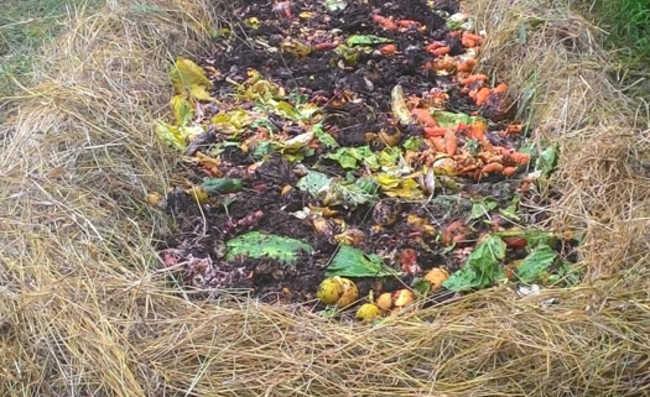 Grupo de Trabalho propõe regulamentar gestão de resíduos orgânicos