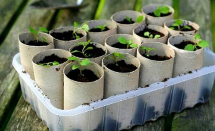 Transforme seu rolo de papel higiênico em uma sementeira