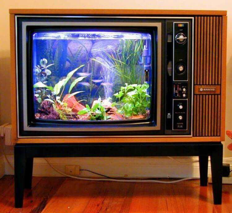 Televisão antiga transformada em aquário