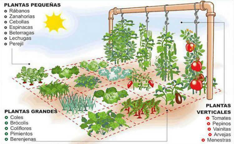 Como fazer a horta de 1 m²