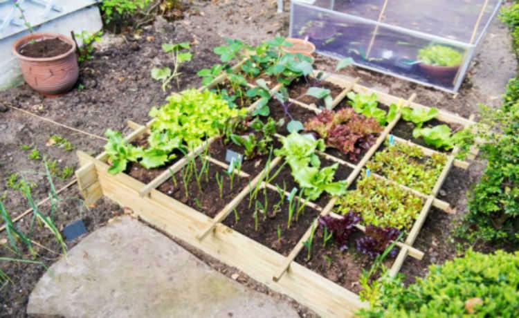 Horta de 1 m²
