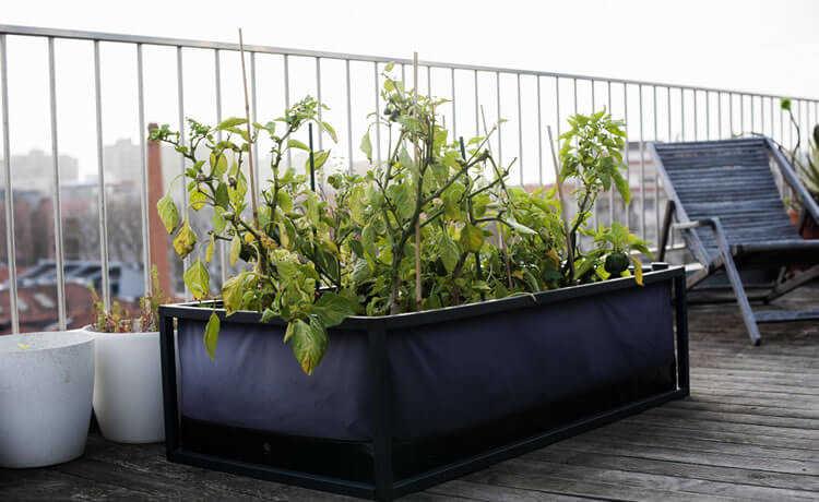 Horta móvel e inteligente traz praticidade e economia