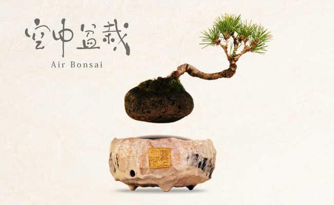 Usando magnetismo, Air Bonsai faz planta flutuar