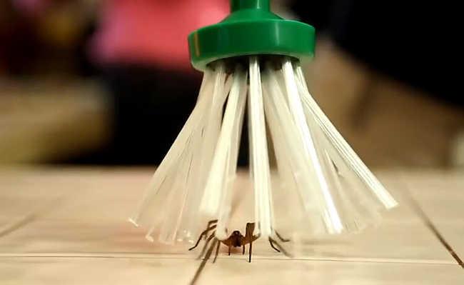 Ferramenta proporciona a captura de insetos e aracnídeos de forma fácil e sem machucá-los