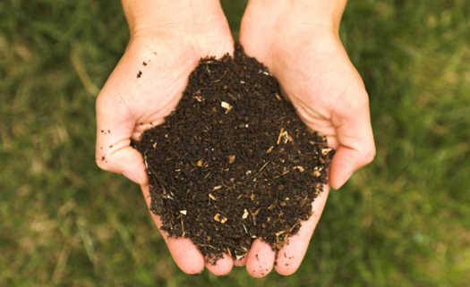 compostagem com minhocas domésticas