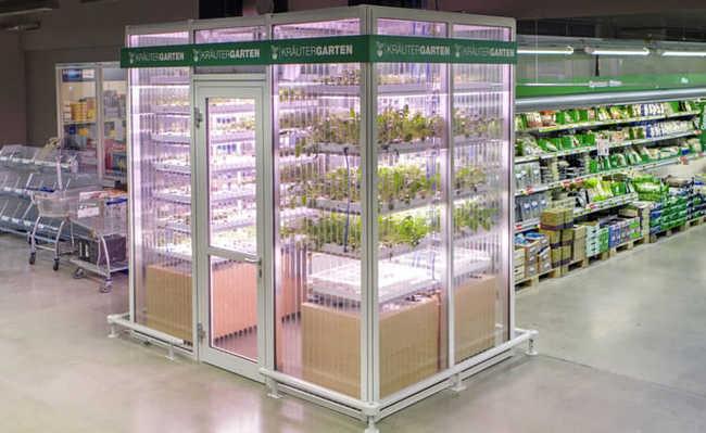 Supermercado alemão cultiva vegetais dentro da própria loja