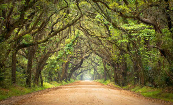 Botany Bay Plantation, Edisto Island, South Carolina, Estados Unidos