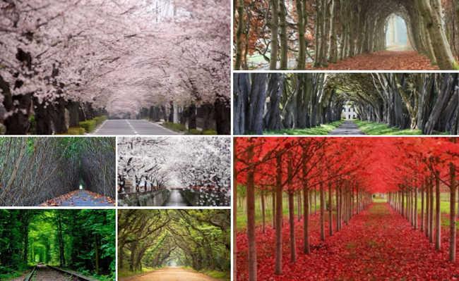 Túneis de árvores deslumbrantes