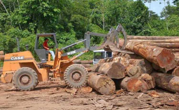 Madeiras de desmatamento