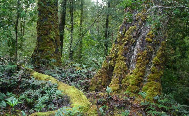 Floresta de Tarkine, Austrália