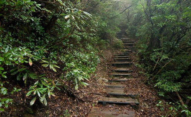 Floresta de Yakushima, Japão