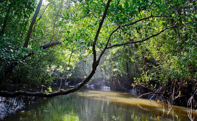 Floresta Tropical Daintree, Austrália