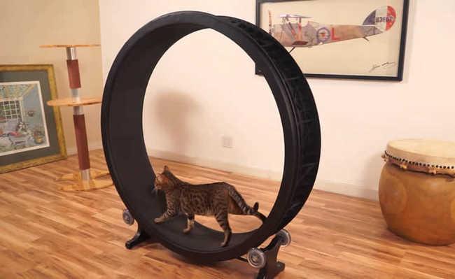 Roda de exercícios para gatos