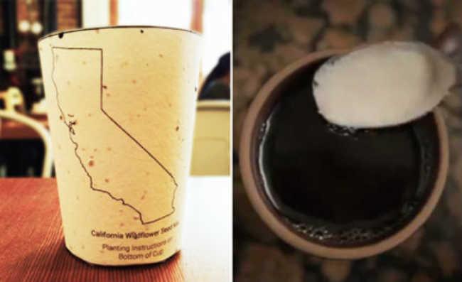 """Copo de café pode ser """"plantado"""""""