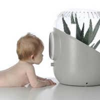 O purificador melhora a absorção e filtragem do ar pelas plantas