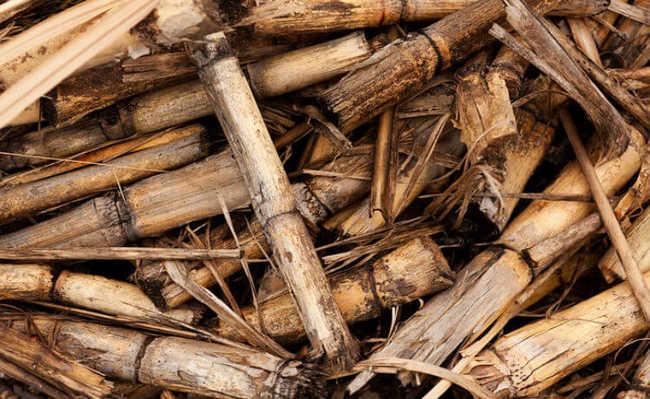 Biomassa: bagaço de cana-de-açúcar