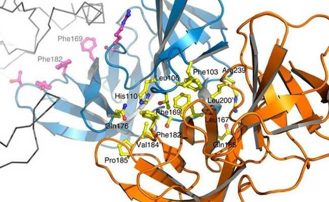 Inibição de interação entre proteínas