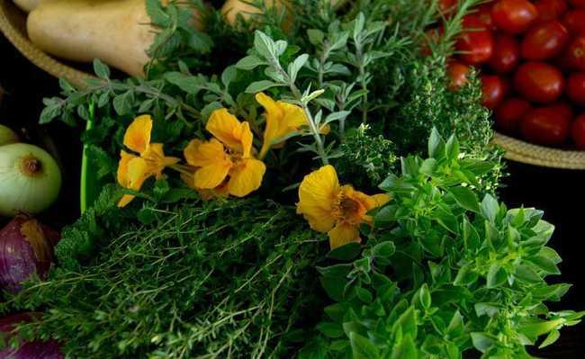 Pancs (plantas alimentícias não-convencionais)