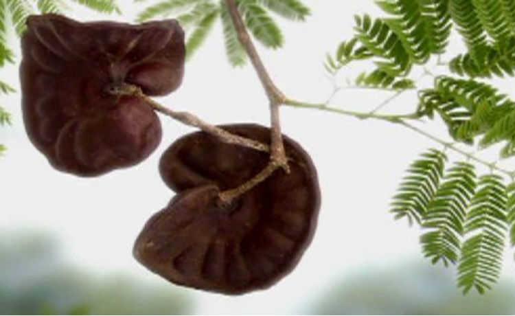 Orelha-de-macaco