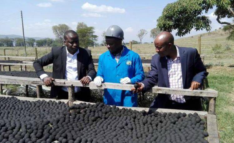 Iniciativa de sustentabilidade no Quênia